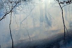 Fire in Forest 5. A fire in leafy forest. Autumn. Russian Far East royalty free stock images