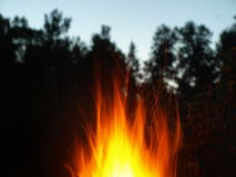 Fire in Forest. Flames of fire captured through the trees of the forest stock images