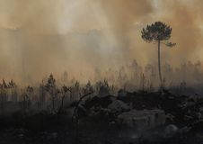 Fire and forest. Tragedy forest burning - resultad and fire Stock Photos