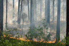 Fire in the forest. Creeping fire in the forest Stock Photo