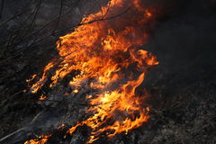 Fire in the forest. Dangerous fire in the forest stock images
