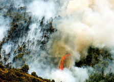 Fire in forest areas in Viotia in Central Greece.  stock photo