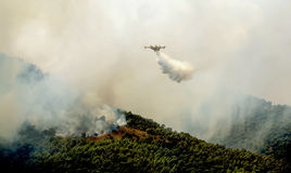 Fire in forest areas in Viotia in Central Greece.  stock photography