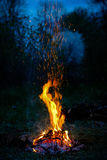 Fire in the forest. Big fire flame in the forest, evening Royalty Free Stock Photo