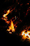 The fire in the forest, Bonfire. Adventure Evening Outdoor Outdoorlife Forest Wood Freedom Bonfire Fire Coals stock photo
