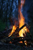 Fire in the forest Stock Images