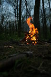 Fire in the forest Royalty Free Stock Photo