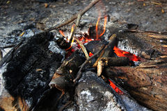 The fire in the forest. Stock Photo