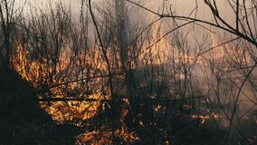 Fire in the Forest, Burning Dry Grass, Trees, Bushes, Flame and Smoke, Wildfires