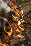 Inflaming the fire. Fire. The fire in the forest. Burning branches royalty free stock photography