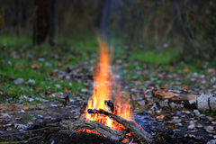 Fire in forest Royalty Free Stock Images
