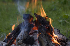 The fire in the forest Stock Image