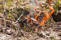 Fire in the forest. Dangerous fire that erupted in the forest Royalty Free Stock Photography