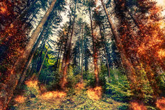 Fire in a forest at daytime Stock Image