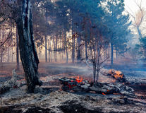 Fire in a forest royalty free stock photography