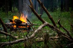 Fire in the forest. And trees royalty free stock images