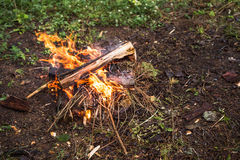 The fire in the forest on a halt. Background Royalty Free Stock Photography