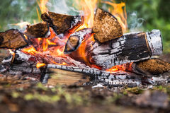 The fire in the forest on a halt. Background Stock Photos