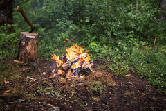 The fire in the forest on a halt. Background Stock Photography
