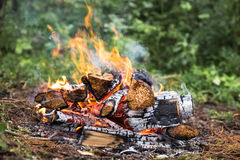The fire in the forest on a halt. Background Stock Image