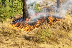 Fire in the forest in the hot summer Royalty Free Stock Photography