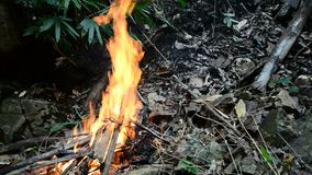 Fire in forest stock video
