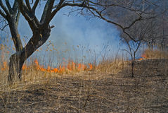 Fire in forest 32 Stock Image