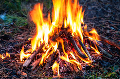 Fire in the forest. Light bright orange stock image