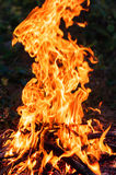Fire in the forest. Light bright orange stock images