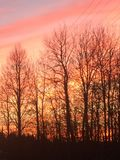 Fire forest. Forest rad sun stock photos