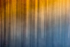 Fire in the forest, smoke, smog, burnt forest. Fire in the forest, smoke, smog, forest burnt royalty free stock images