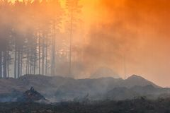 Fire in the forest, smoke, smog, burnt forest. Fire in the forest, smoke, smog, forest burnt royalty free stock image