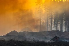 Fire in the forest, smoke, smog, burnt forest. Fire in the forest, smoke, smog, forest burnt stock photography