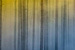Fire in the forest, smoke, smog, burnt forest. stock photos