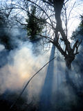 Fire in a forest, smoke and sunlight. Fire in a forest, sunlight casting shadows through the smoke stock image