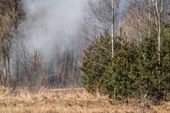 Fire in the forest, smoke visible. In mixed forest at spring time Stock Photos