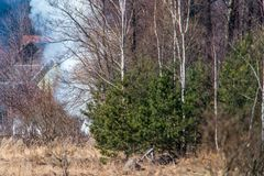 Fire in the forest, smoke visible. In mixed forest at spring time Royalty Free Stock Photos