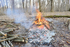 A fire in a forest in spring Royalty Free Stock Image