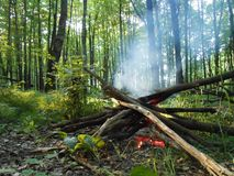 Fire in the forest in summer evening. Royalty Free Stock Photo