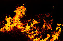 Fire garden. Fire in the wall  so hot, Fire garden Royalty Free Stock Image