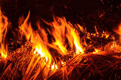 Fire garden. Fire in the wall  so hot, Fire garden Royalty Free Stock Photography