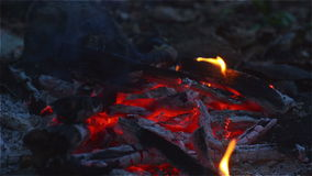 Fire and glow on the forest floor in the camp stock footage