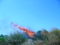 Fire in grass Royalty Free Stock Photography