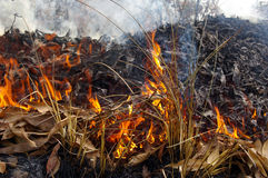 Fire of grass. Royalty Free Stock Photos