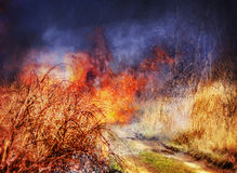 Fire in grass Stock Photography