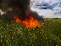 Fire in grass. Green grass in dark fire Stock Images