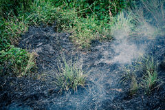 Fire in grass royalty free stock images