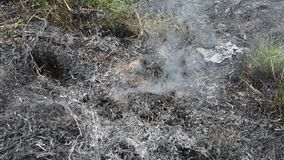 Fire in grass stock video footage