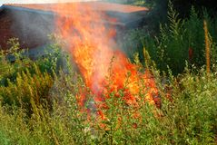Fire in green grass Royalty Free Stock Image