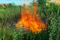 Fire in green grass. Orange fire over dry brushwood in green grass Royalty Free Stock Photo